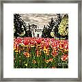 Tulips And Building Framed Print