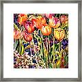 Tulips Framed Print by Ann  Nicholson