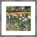 Tulips At Dallas Arboretum V33 Framed Print