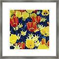 Tulips Blue Framed Print