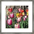Tulips - Field With Love 07 Framed Print