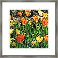 Tulips - Field With Love 41 Framed Print