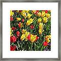 Tulips - Field With Love 49 Framed Print