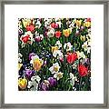 Tulips - Field With Love 58 Framed Print