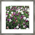 Tulips - Field With Love 60 Framed Print