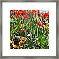 Tulips - Field With Love 64 Framed Print