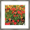 Tulips - Field With Love 68 Framed Print