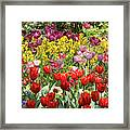 Tulips In St James's Park, London Framed Print
