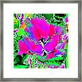 Tulips - Perfect Love - Photopower 2183 Framed Print
