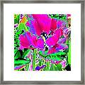 Tulips - Perfect Love - Photopower 2184 Framed Print