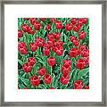 Tulips Tulips And Tulips Framed Print