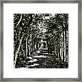 Tunnel Of Trees ... Framed Print