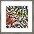 Turkey Feather Colors Framed Print