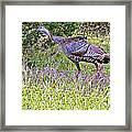 Turkey In The Draw Framed Print