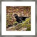 Turkey Vulture Framed Print