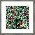 Turks Cap And Rain Drops Framed Print