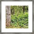 Turk's Cap And Tree Framed Print