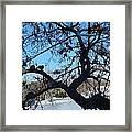 Twelve Doves Framed Print