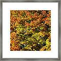 Twin Maples Framed Print