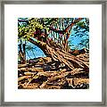 Twisting Trees Framed Print