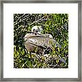 Two Brown Pelicans Framed Print