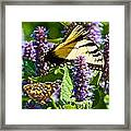 Two Butterflies In The Afternoon Sun Framed Print