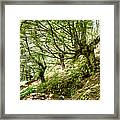 two little brothers Chasing Fairies in theBeech Forest on a summer day Framed Print