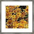 Two Toned Yellow Blooms Framed Print