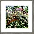 Tyrannosaurus Rex  T. Rex Framed Print