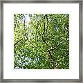 Under Leaf Canopy Framed Print