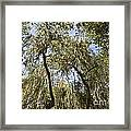 Under The Canopy - The Magical And Mysterious Trees Of The Los Osos Oak Reserve Framed Print