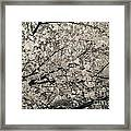 Under The Cherry Tree - Bw Framed Print by Hannes Cmarits