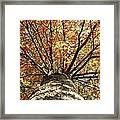 Under The Leaves Framed Print