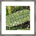 Unripe Anthurium Fruit Framed Print
