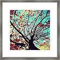 Untitled Tree Web Framed Print