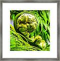 Unveiling Life Framed Print