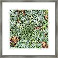 Unwanted Nature Framed Print