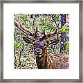 Up Close And Personal With An Elk Framed Print