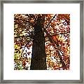 Up Fall Framed Print