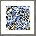 Up Into The Trees Framed Print