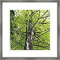 Up The Oak Tree Framed Print