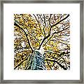 Up The Tree Framed Print