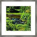 Upper Dewey Creek Framed Print