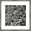 Vagabon Blue Bird Framed Print