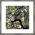 Veins Of Life Framed Print