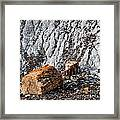 Very Old Logs Framed Print