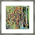 Vibrant Berries Framed Print