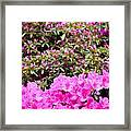 Vibrant Colors Framed Print
