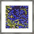 Vibrio Bacteria Sem Framed Print