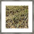 Vidalia Onion Seed Field - Georgia Framed Print